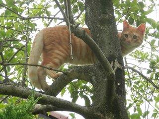 木登りモカ